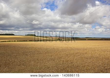Harvested Fields In Summer