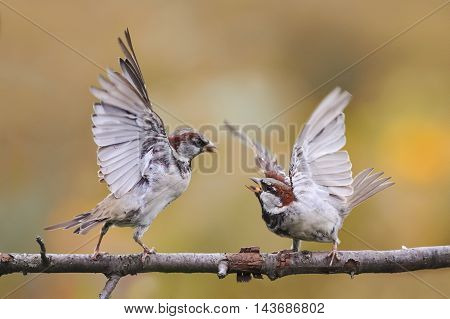two angry birds fighting on a tree branch with its wings outstretched