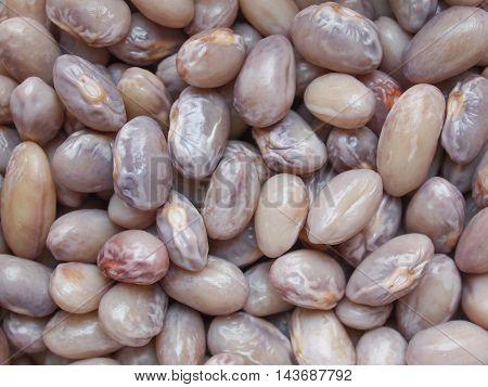 Crimson Beans Legumes Vegetables
