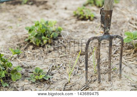 A farmers pitchfork standing upright in the dirt.