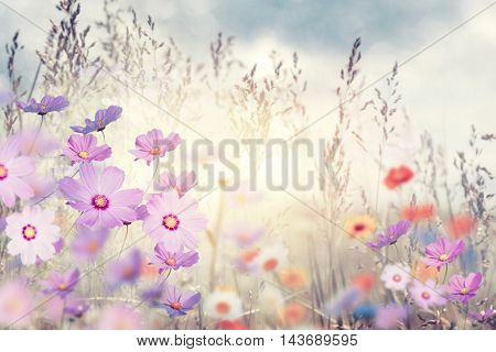 Meadow with wild flowers at sunset