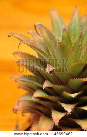 A close up of  green pineapple leaves