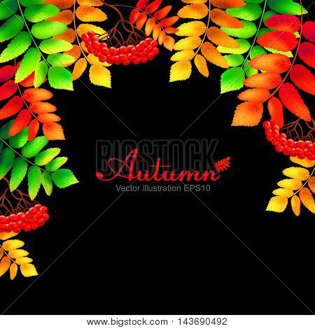Colorful autumn rowan leaves and berries. Vector illustration.