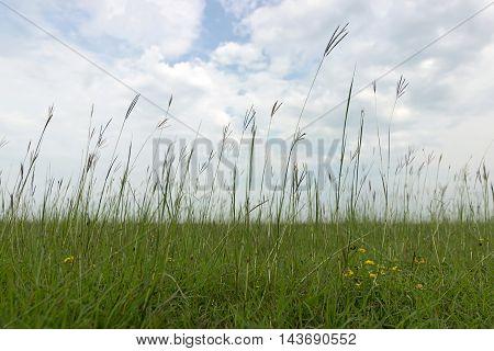 Natural meadow in Summer. Green meadow, Summer meadow
