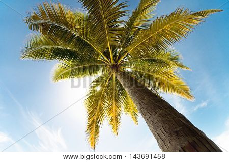 Perspective view of coconut palm tree against blue sky. Maldives