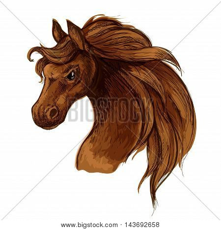 Horse head sketch portrait. Mustang stallion with brown waving mane