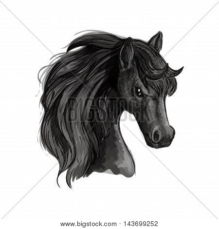 Horse head pencil sketch portrait. Vector isolated black stallion with mane on white background