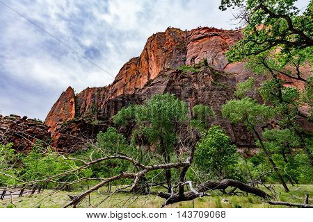 Beautiful Sandstone Cliffs and Rock Formations in Zion National Park Utah.