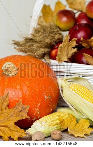 Thanksgiving Day. Still life of pumpkins and corn grapes and nuts apples and pears.