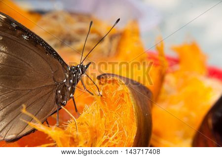 Brown Butterfly Suck Nectar From Palmyra