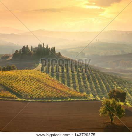 Beautiful rural landscape - Early morning on countryside, San Quirico d�´Orcia, Tuscany, Italy, Europe