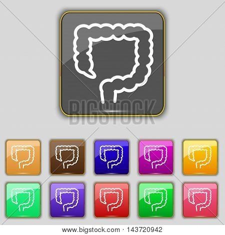 Large Intestine Icon Sign. Set With Eleven Colored Buttons For Your Site. Vector