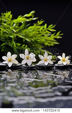 gardenia ,green bamboo with therapy stones