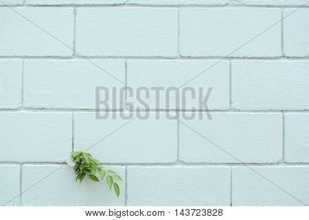 Little green treen on the brick block wall with pastel blue color.