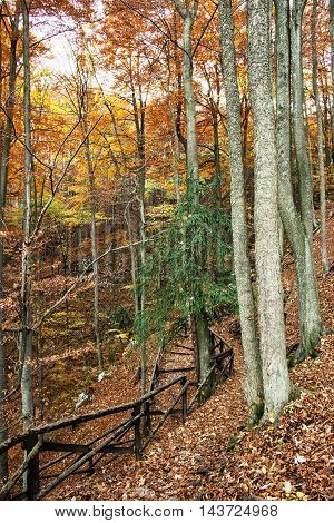 Hiking Path With Railing In The Autumn Deciduous Forest, Hiking Theme