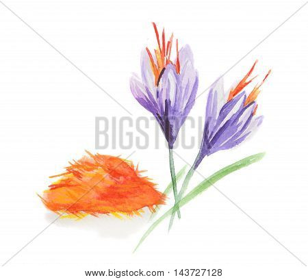 Watercolor saffron flowers. Isolated spice on white background. Indian seasoning for meal or dessert.