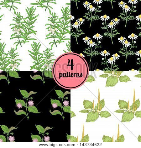 Set of four seamless vector patterns with various plants daisy plantain rosemary.