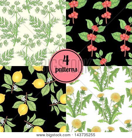 Set of four seamless vector patterns with different plants poppy hemp chamomile caraway.