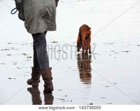 Daily dog walk, rainy weather. Dog puppy and it's owner.