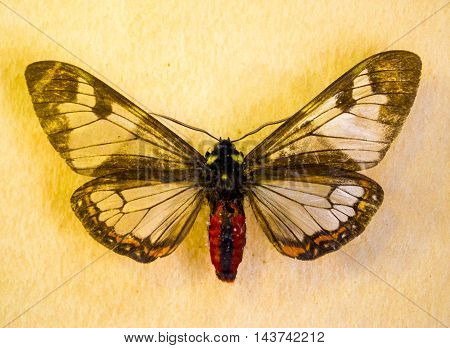 butterfly insect nature pattern animal colorful macro