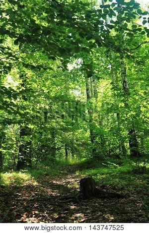 Green Dark Forest