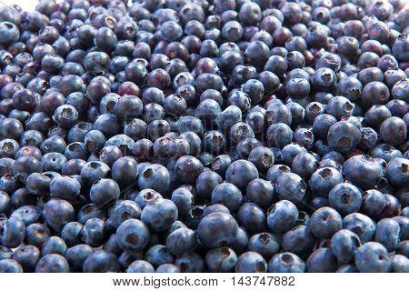 Blueberries wild fruit fresh raw food on background