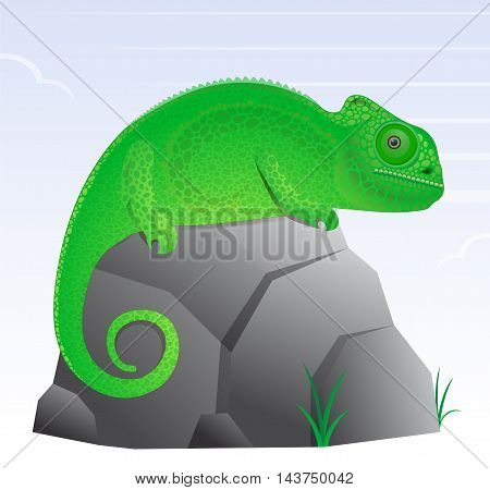 Chameleon lizard cartoon character cute and texturized
