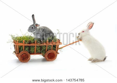white rabbits in the cart on a white background
