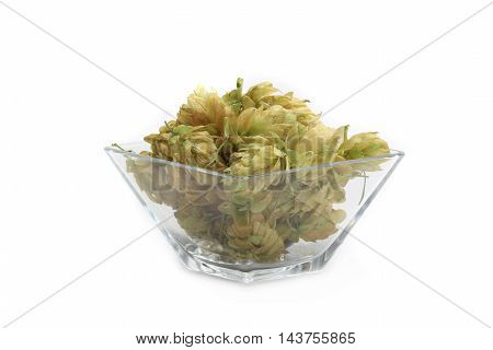 hop in glasswares on a white background