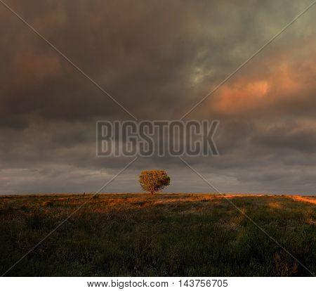 Dark sky with clouds and solitary tree