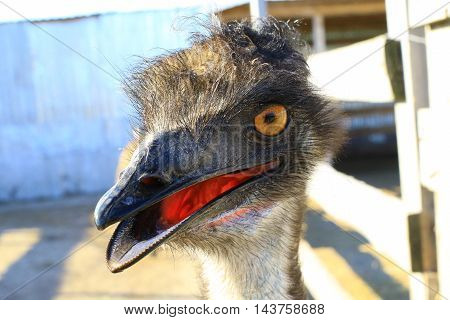The a portrait emu on a blue background