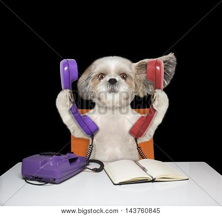 Cute dog is talking over two phones -- isolated on black