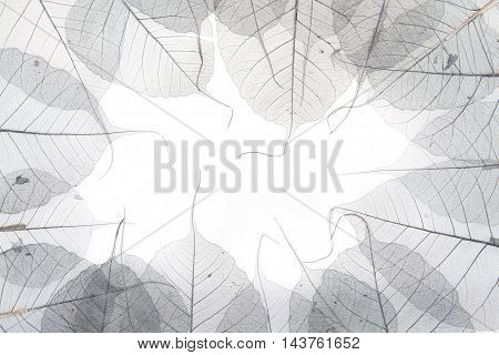 Dried Leaves As Nice Background