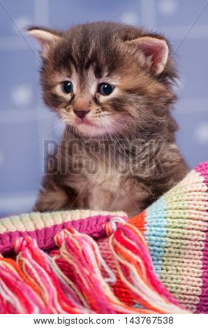 Sad cute kitten in a warm knitted scarf over light blue background