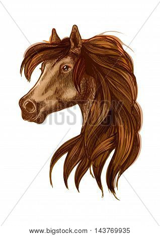 Brown horse head with long wavy mane. Gazing bay stallion. Beautiful pony portrait