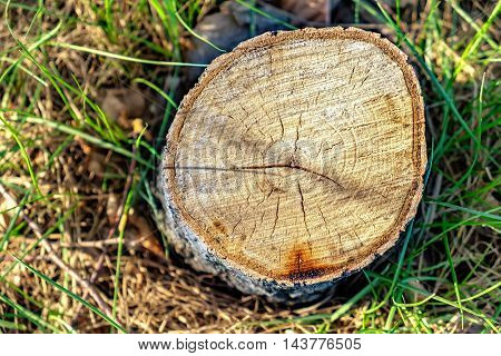Stump with grass background in the forest. Abstract natural photo. Deforestation concept with a tree stump.
