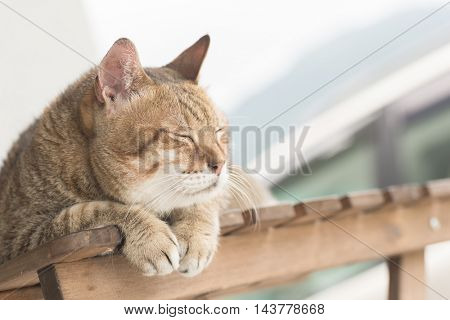 Domestic cat, closeup portrait with face.