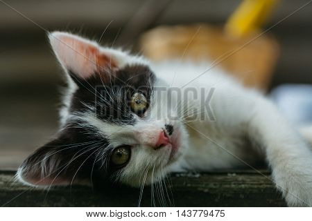 Cute Small Kitten Outdoor