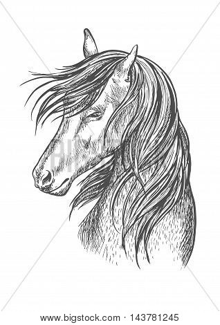 Horse pencil sketch portrait. Beautiful stallion or mare with shy look expression and waving mane. Vector line silhouette