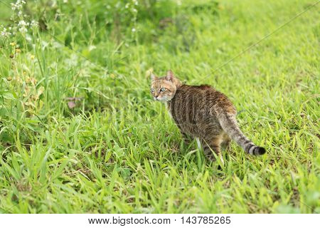 cat in the grassland