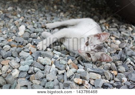 cute baby cat lying on ground