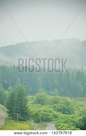 thick morning fog in the summer forest. thick fog covered with thick coniferous forest. thick fog covered with thick coniferous forest.
