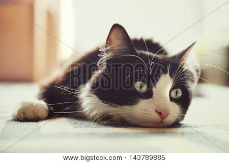 Cat lying on rug in natural light.