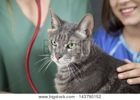Cat With Girl And Doctor In Background