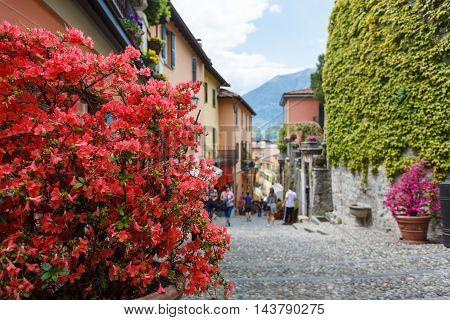 Flowers on a street of Bellagio Italy