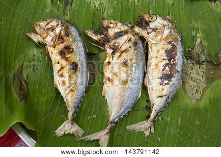 Fish Thailand, grilled fish, mackerel fish, mackerel.food.fish, Thai food