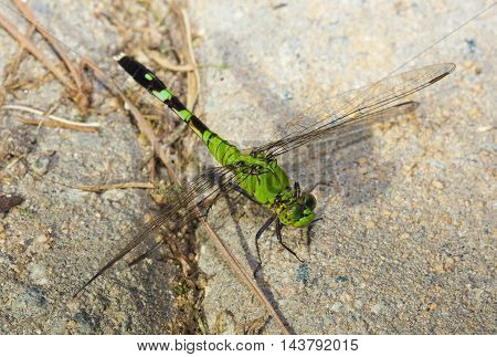 Green dragonfly resting on some sand set bricks