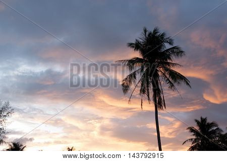 silhouette of coconut palm trees silhouette on colorful sun set