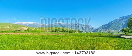 The beautiful green meadow with a juicy grass for grazing farm animals and Gissar mountain range on the background Qashqadaryo Region Uzbekistan.