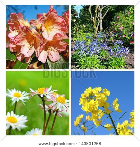 Beautiful springtime collage of fresh flowers and gardens
